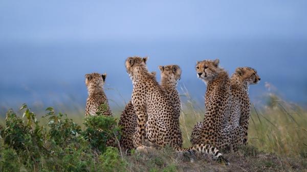 12 days Uganda + Kenya + Zanzibar safari